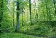 nordic-walking-5-oberelsbach-minigolfplatz-bild