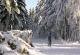 Winterwanderweg 12 Berghaus Rhön Winterlandschaft
