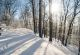 Winterwald Sonne
