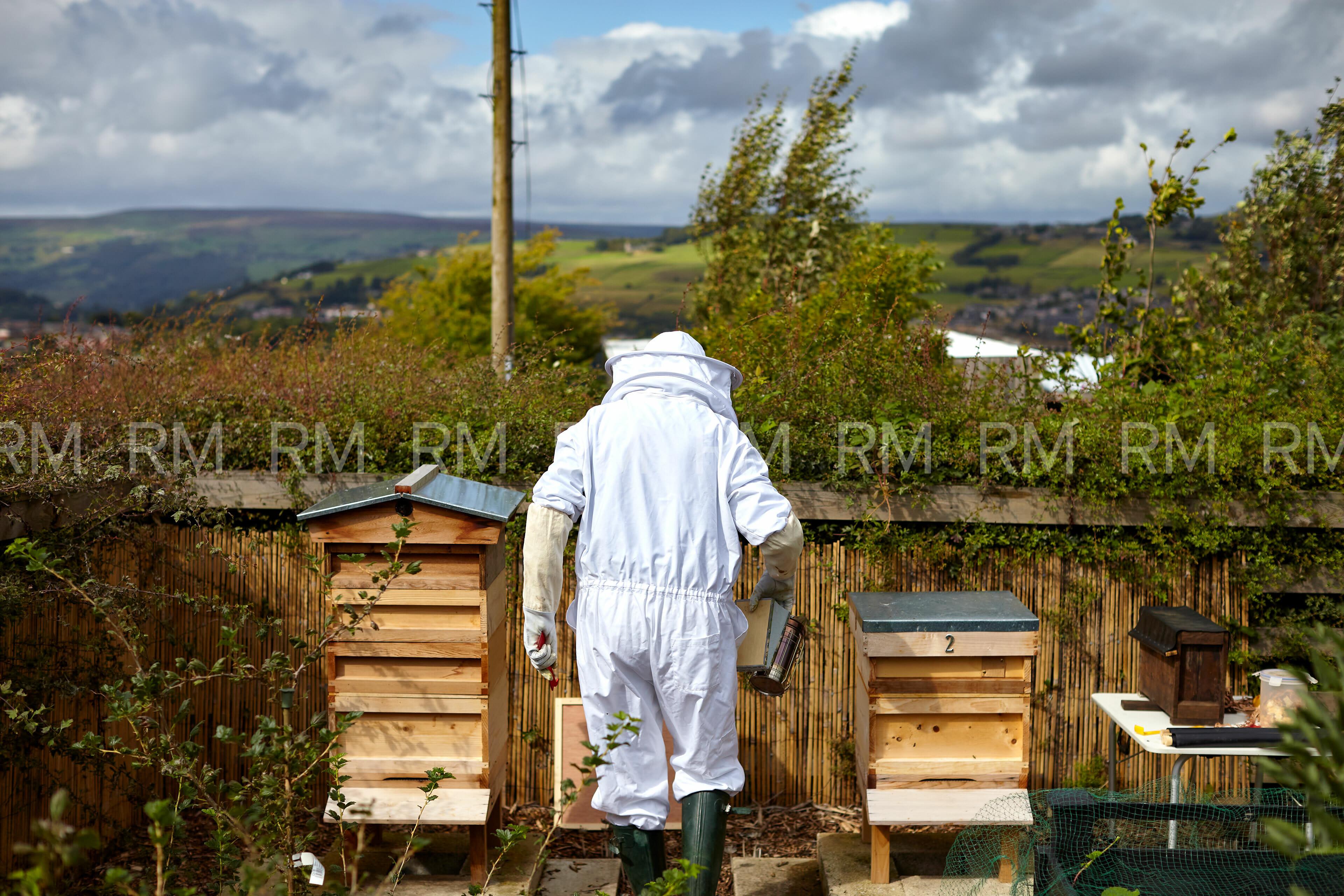 Richard Moran Bees 001