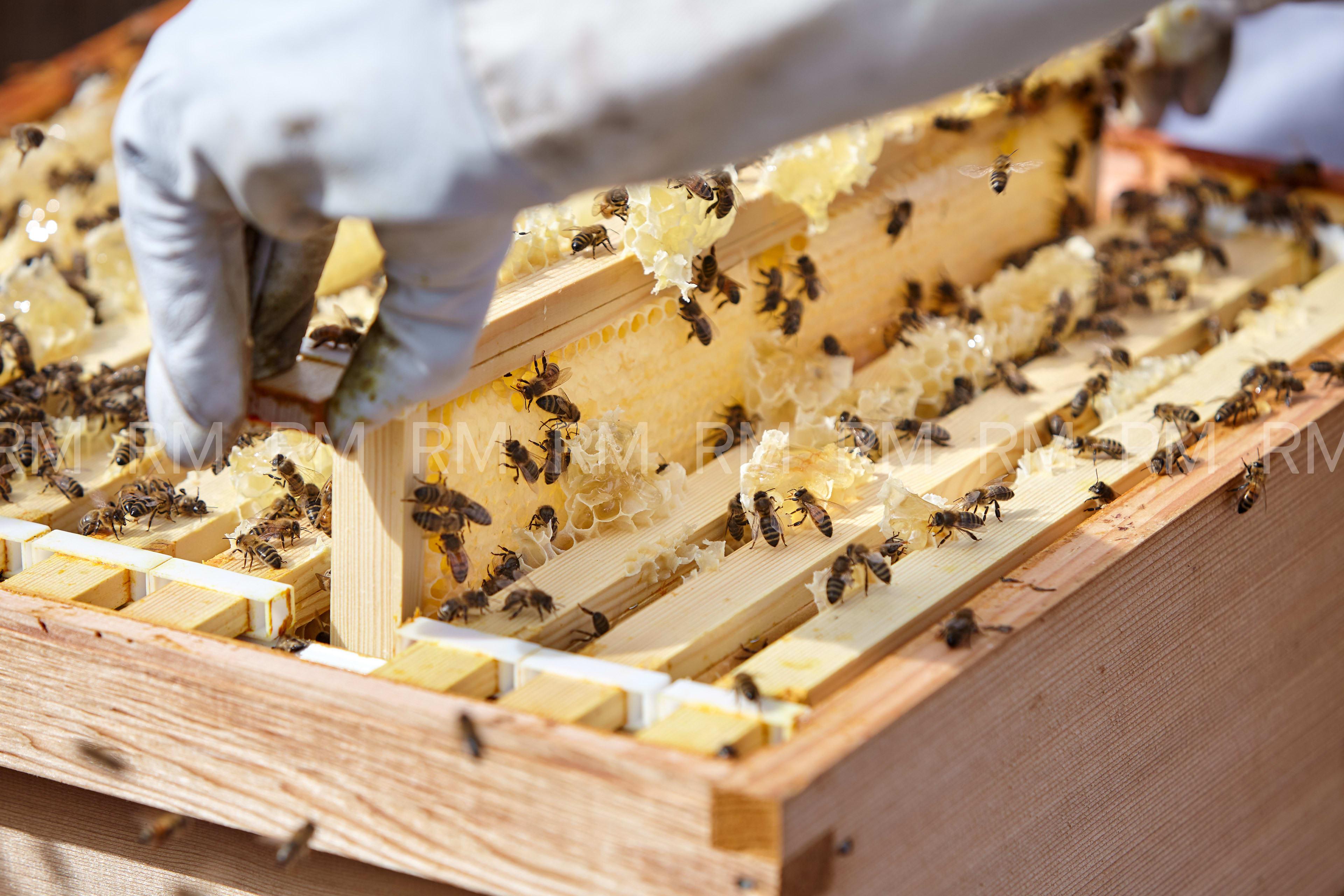 Richard Moran Bees 002