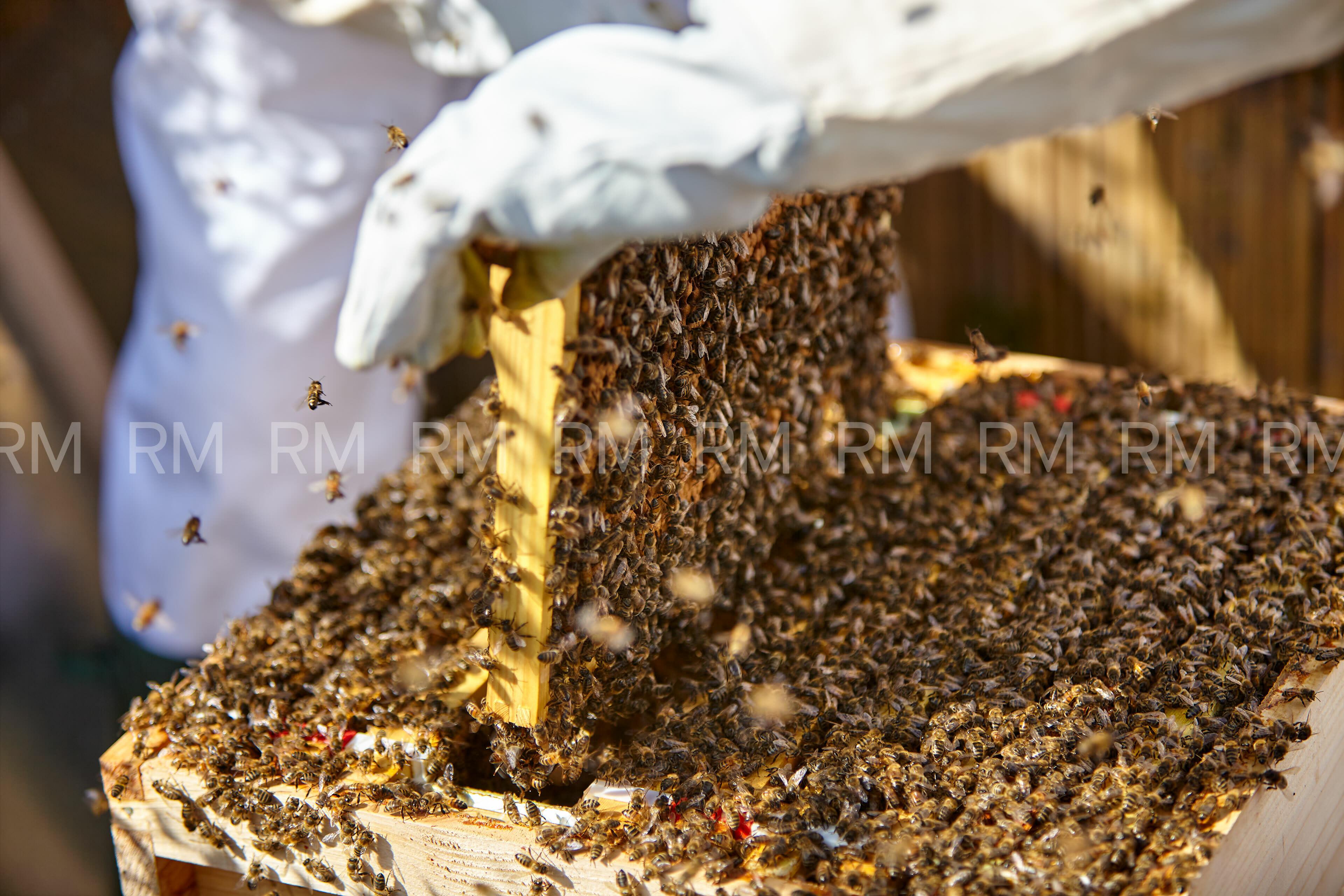 Richard Moran Bees 004