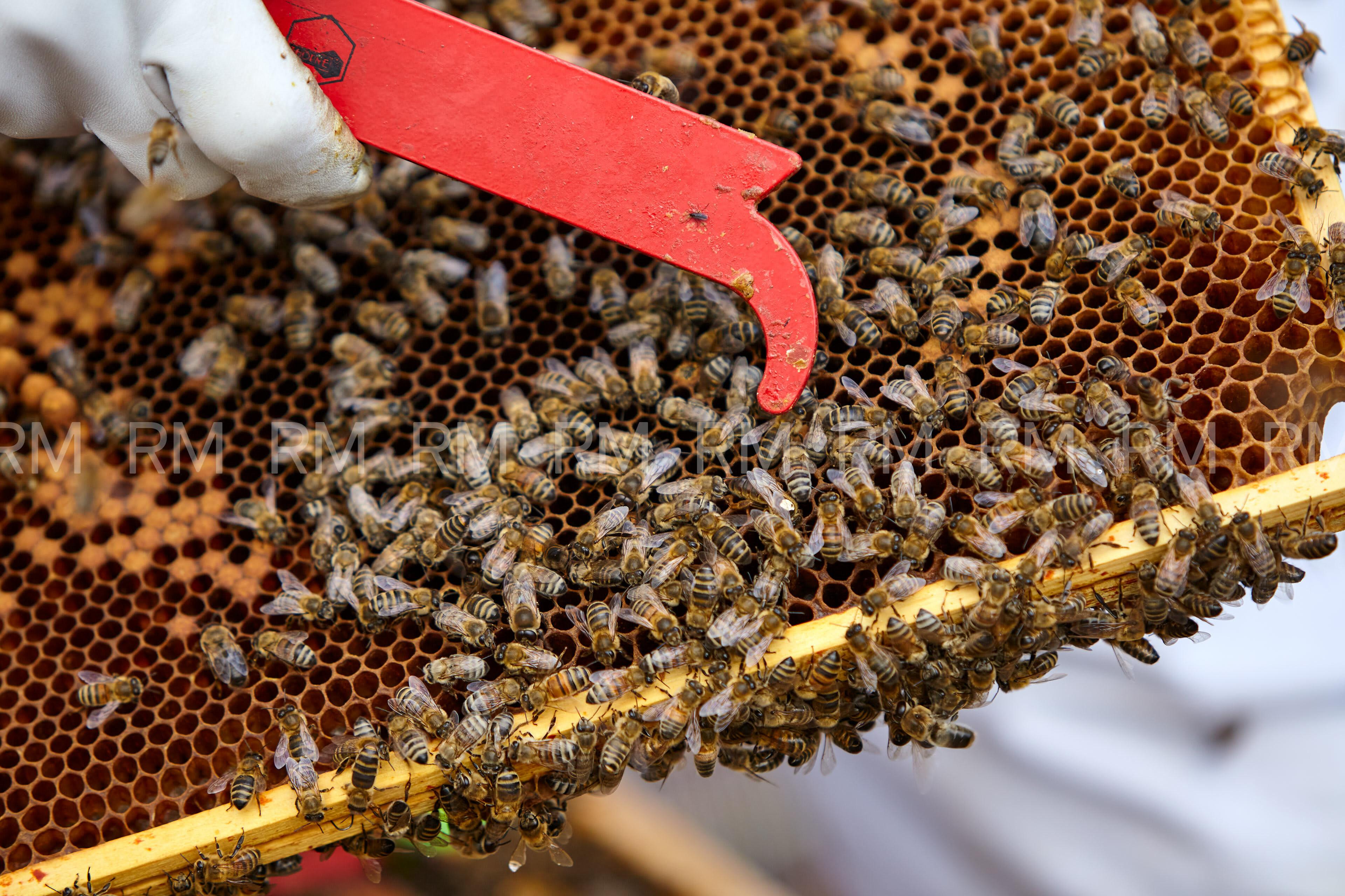 Richard Moran Bees 006