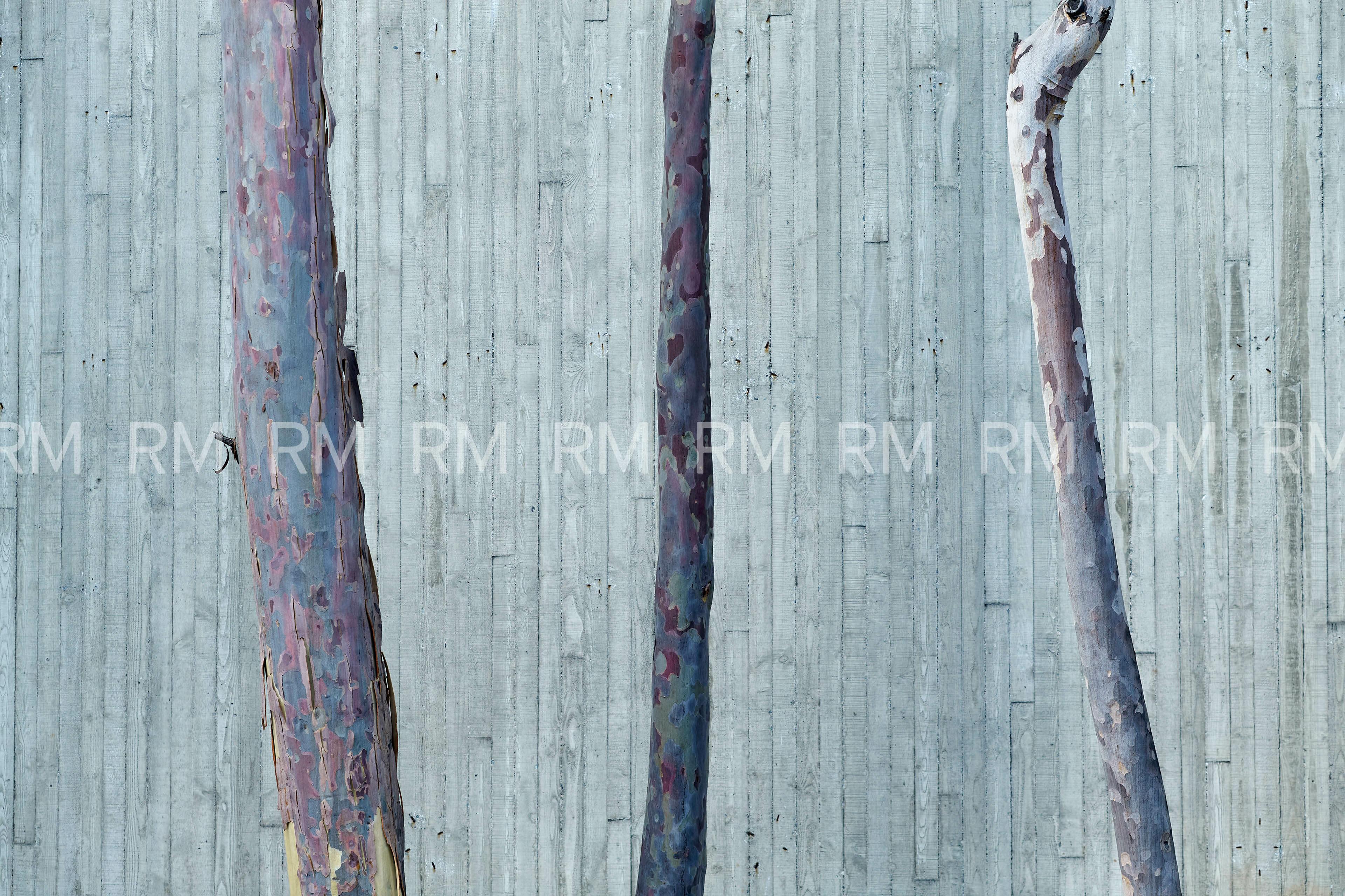 Richard Moran Environment 054