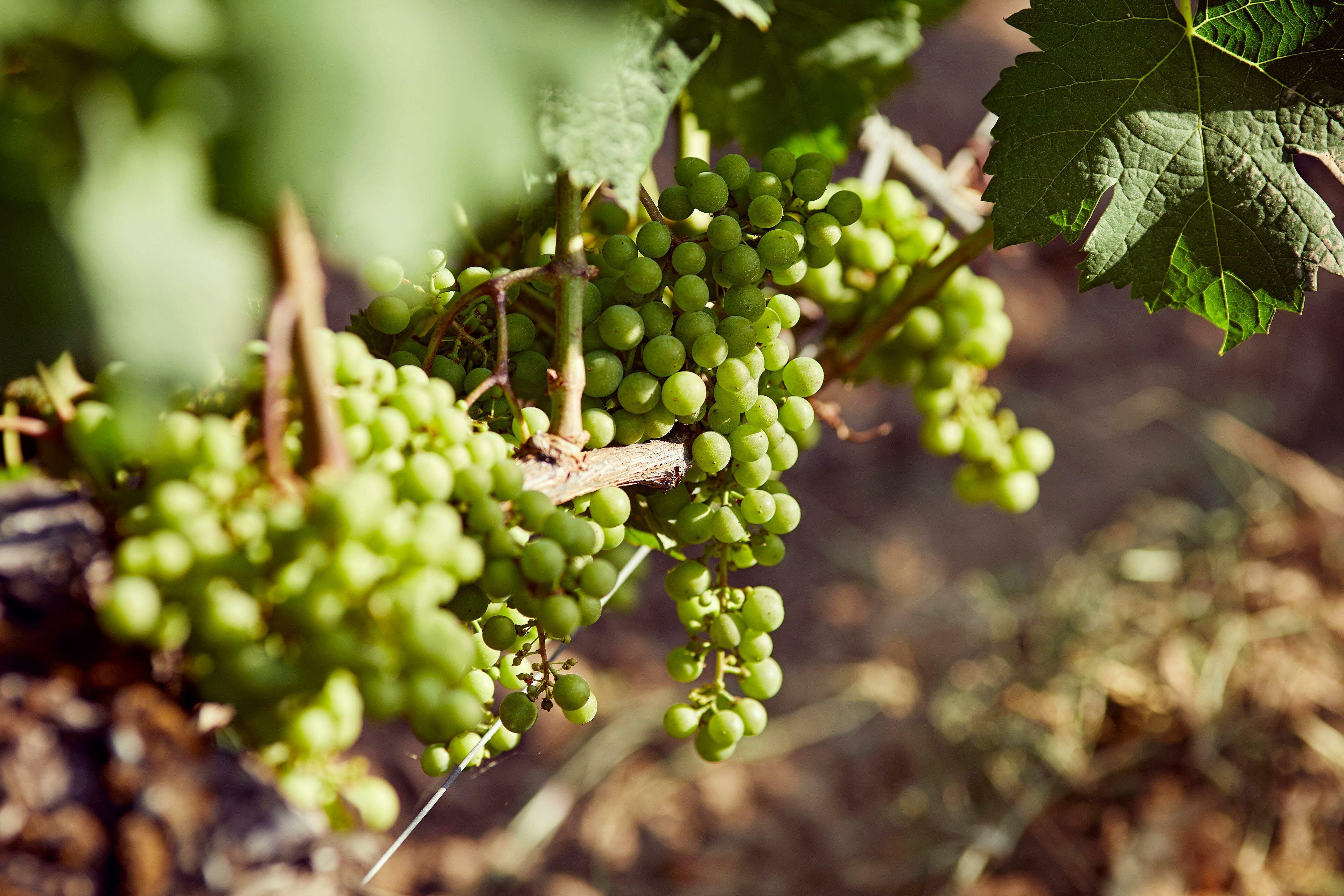 Richard Moran Viniv Wine Bordeaux Lifestyle 010