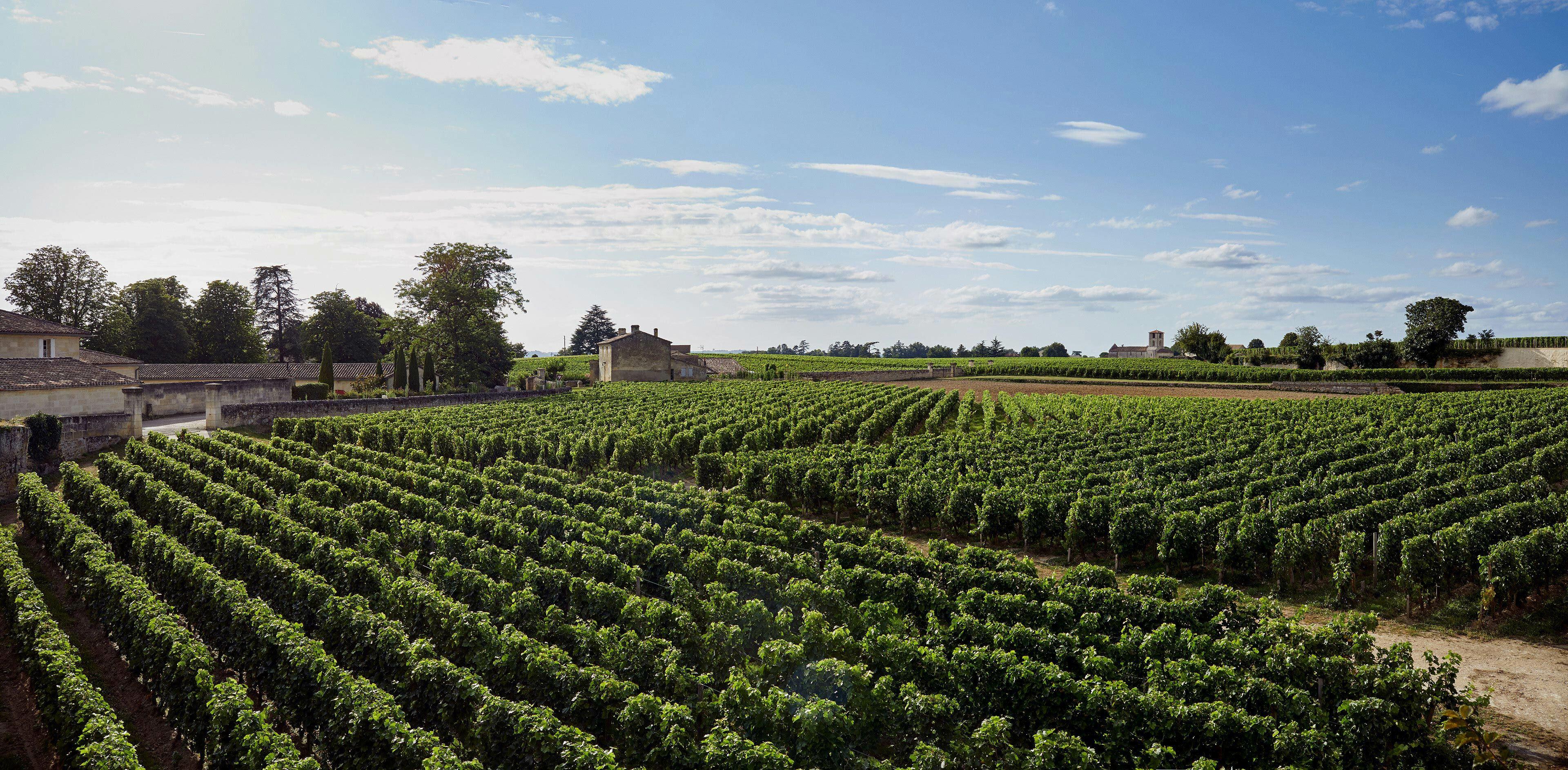 Richard Moran Viniv Wine Bordeaux Lifestyle 032