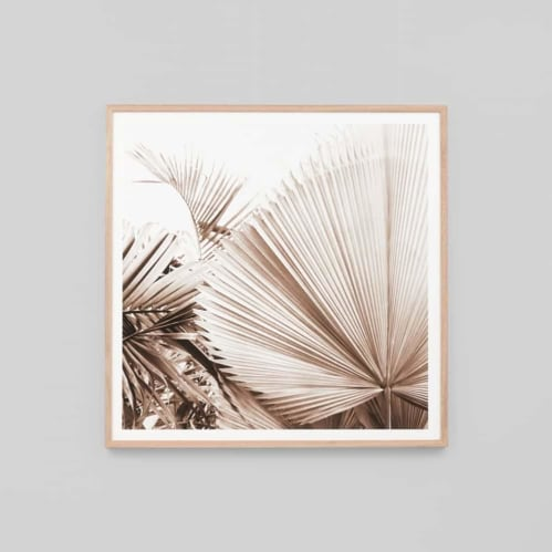 Desert Palm 1 Framed Print