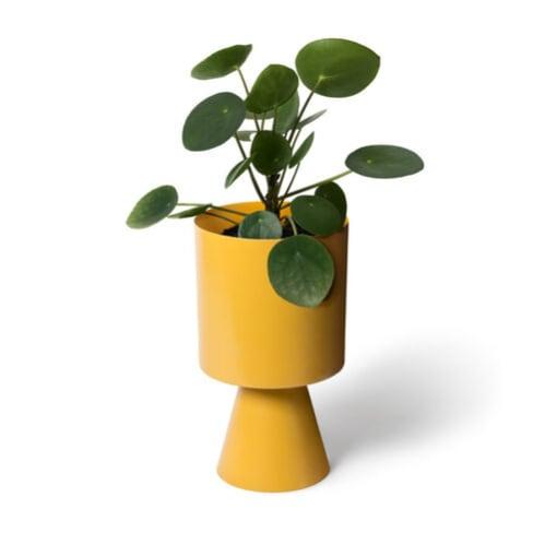 Palm Springs Medium Planter - Turmeric