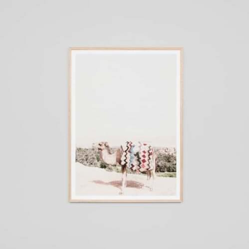 Desert Camel Framed Print