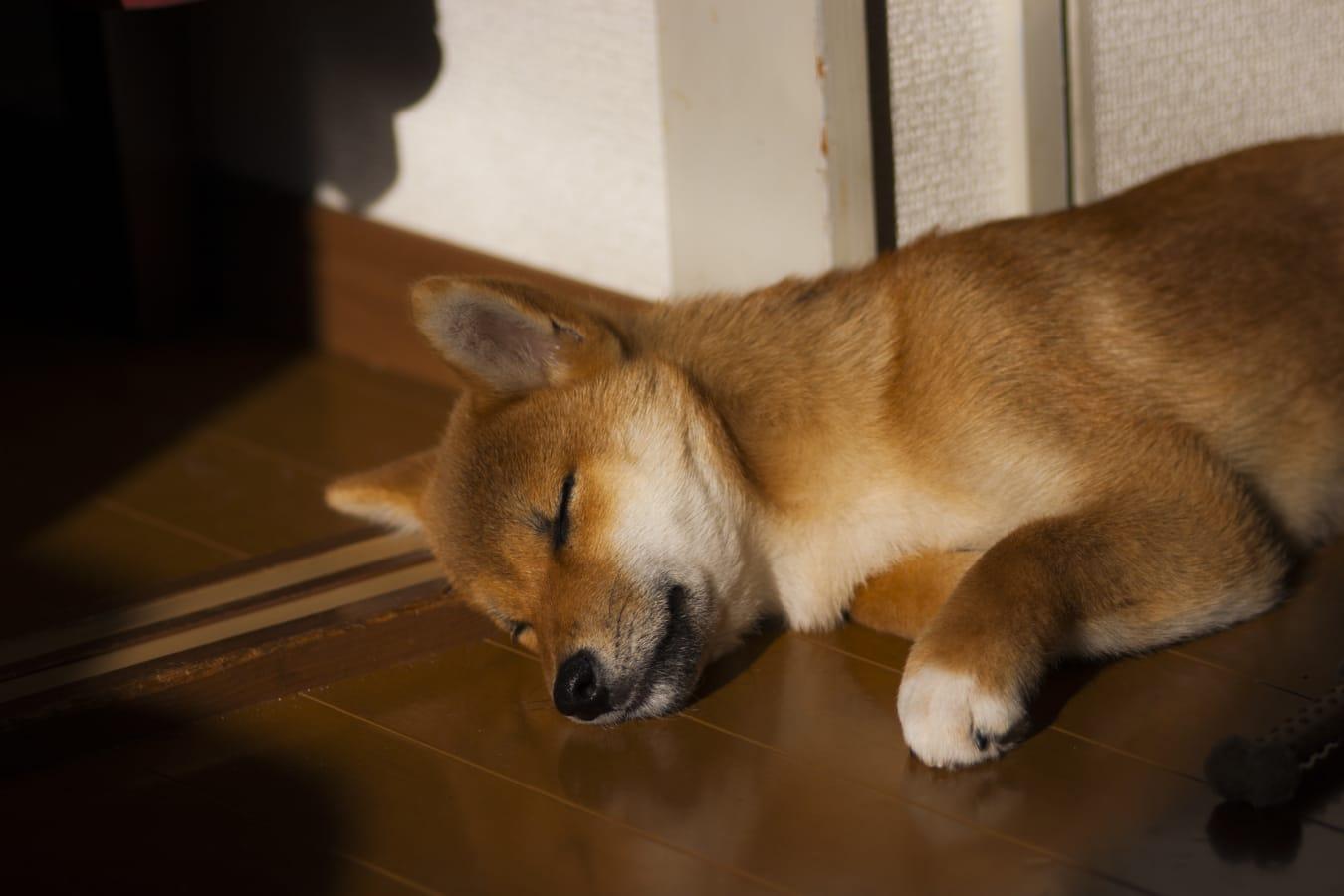 Storm sleeping