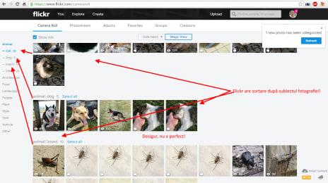 Noua interfață de la Flickr, cu aranjare după subiectul fotografierii