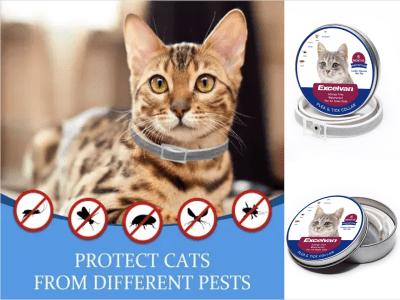 Collar Antipulgas para Gato, 6 Meses de Protección contra Diferentes Plagas, Todos los tamaños de gatos, 100% seguro para su gato, Resistente al agua, Sin alergias, Componentes 100% naturales