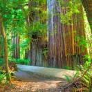 Redwood National Park: The History and the Beauty!