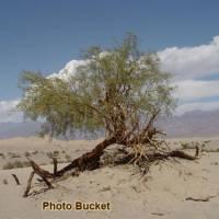 Death Valley | Photo Gallery