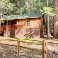 redwoods-in-yosemite-74-3