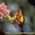 There are many different types of flowers and insects in the park.