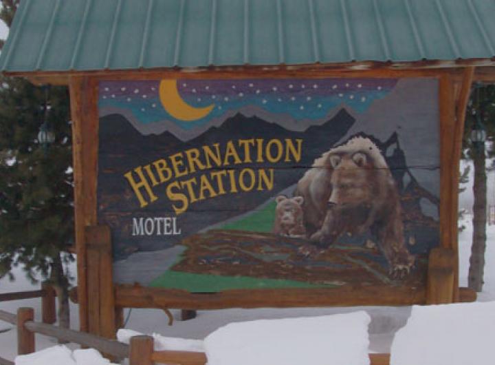 Hibernation Station   Yellowstone National Park
