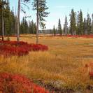 Fall Colors: Yellowstone National Park