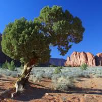 Mesa Verde | Photo Gallery