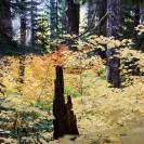 Fall Colors: North Cascades National Park