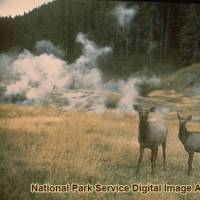 Yellowstone | Photo Gallery