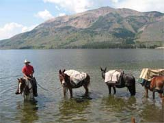 pack mule in Yellowstone park