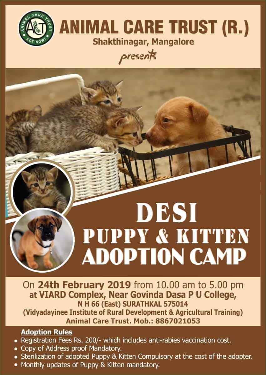 puppy-kitten-adoption-surathkal feb 24 2019