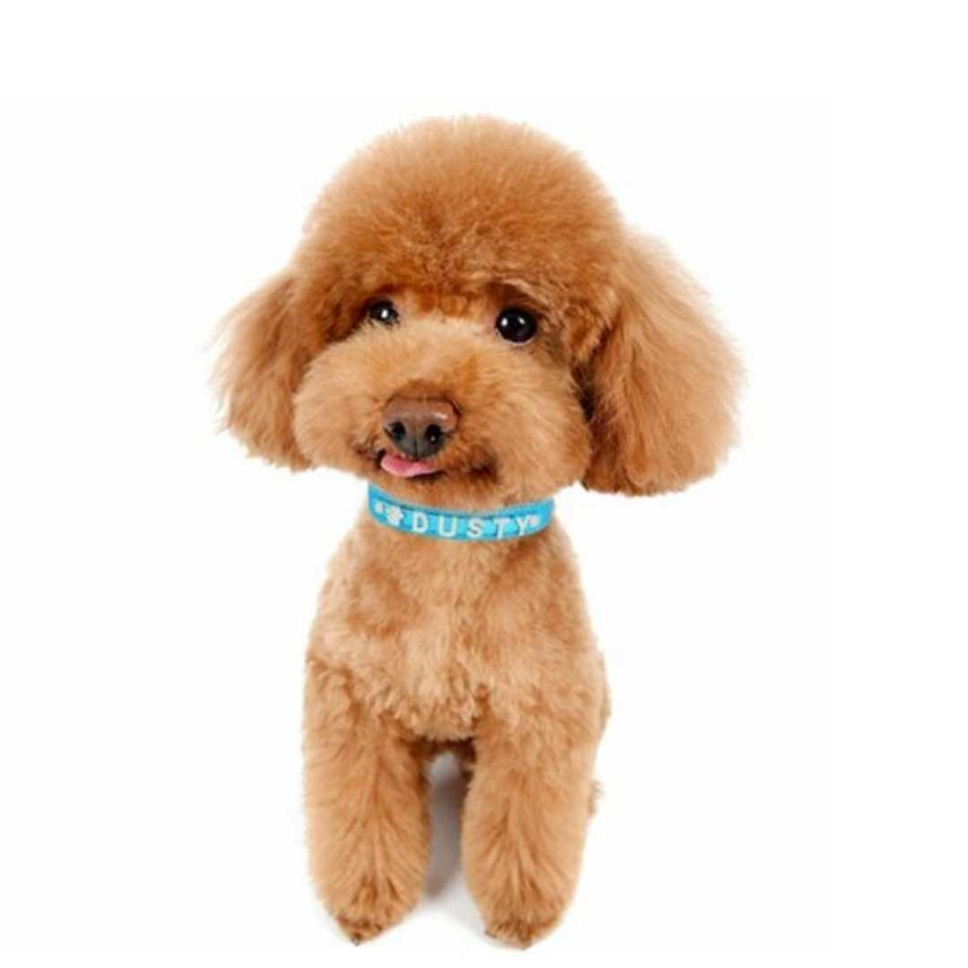 Blue Dog Collars Uk
