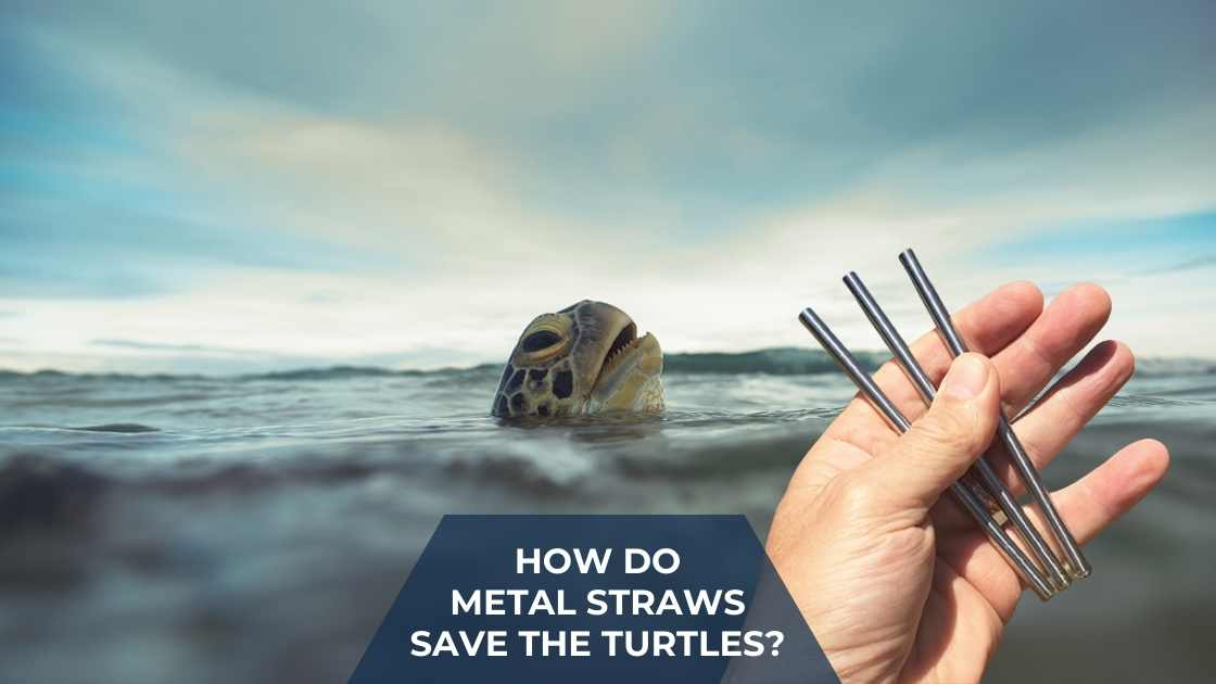 How do Metal Straws save the turtles