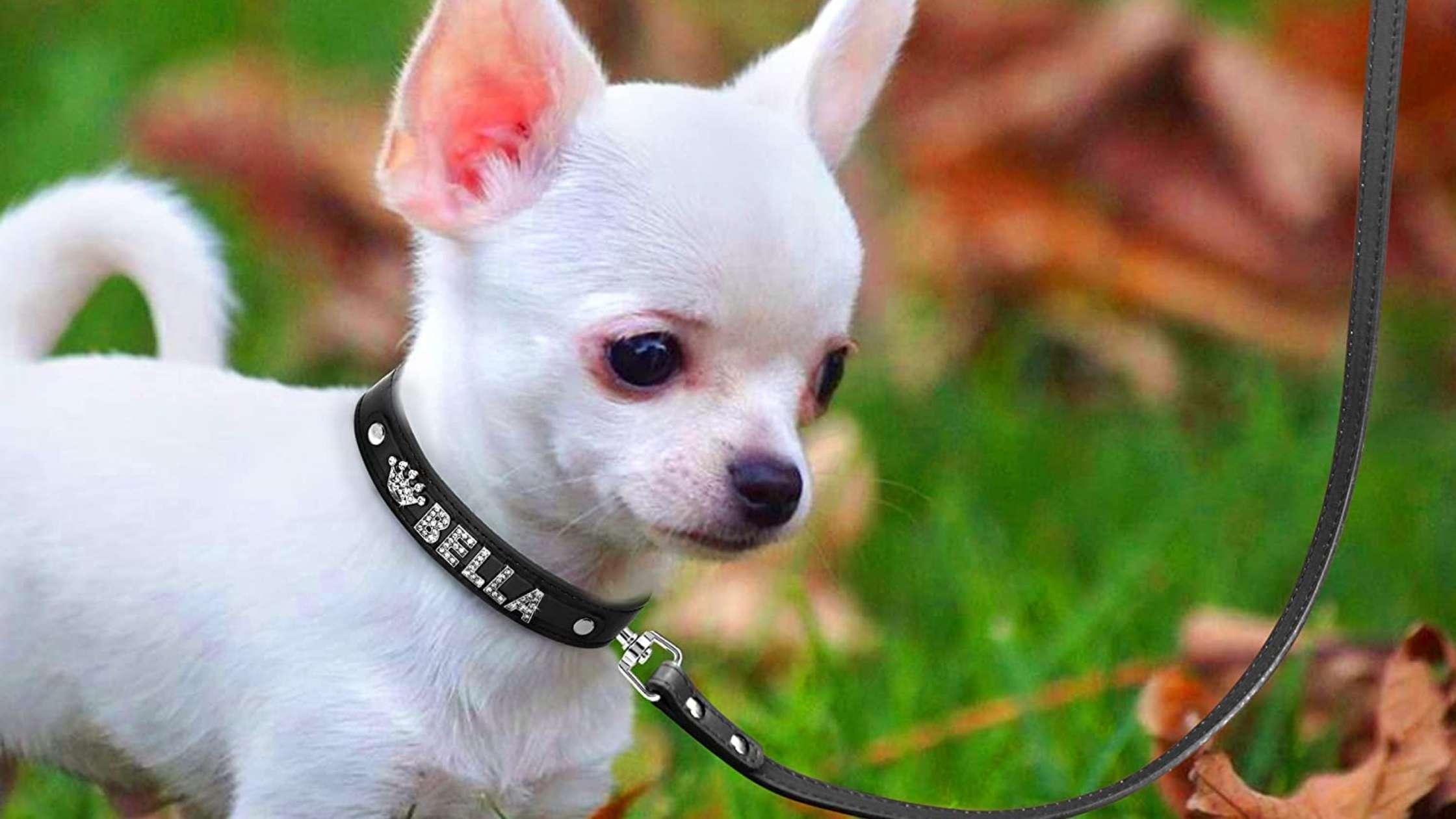 Leather Dog Collar UK