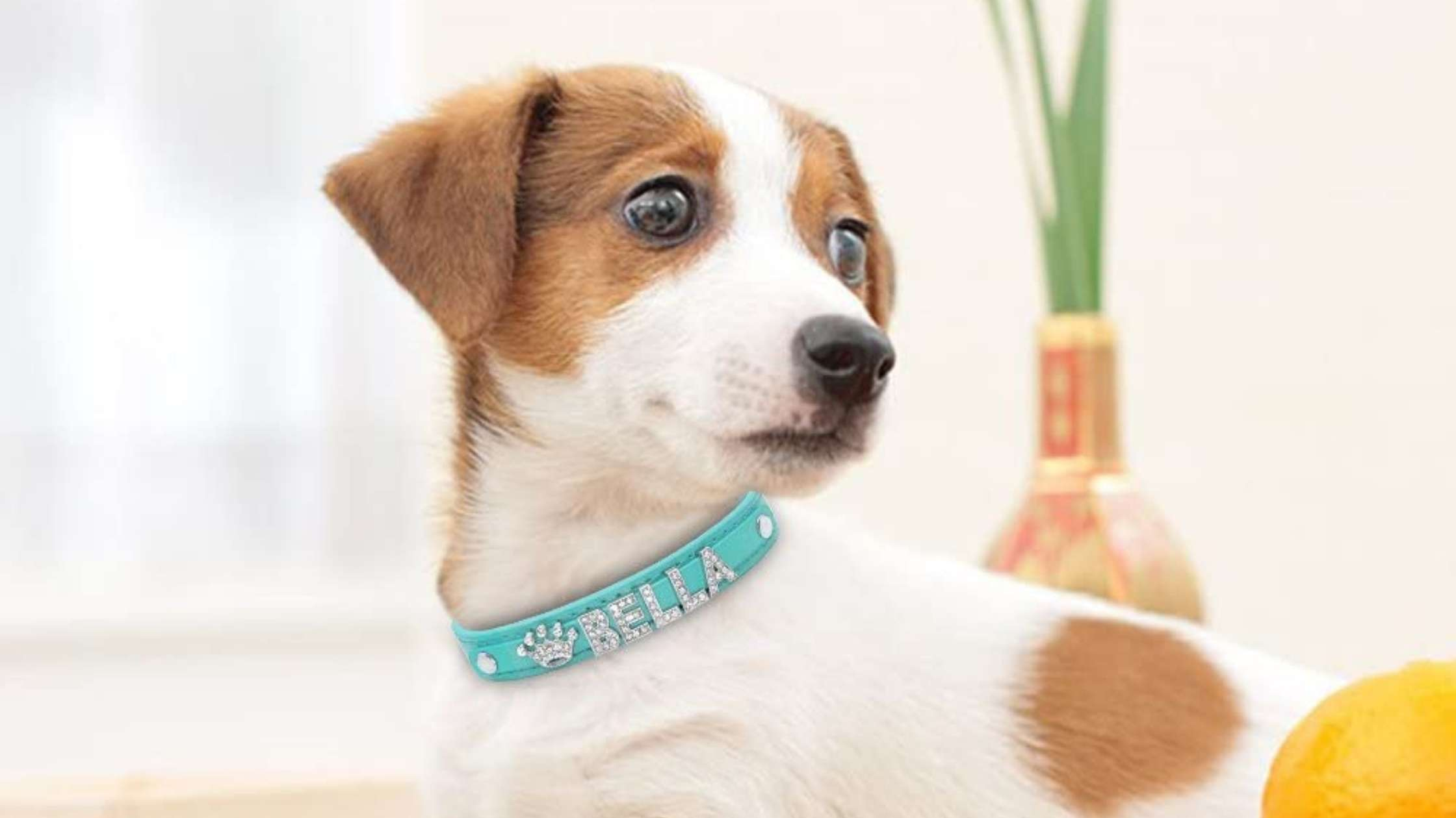 Personalised Dog Collar Uk