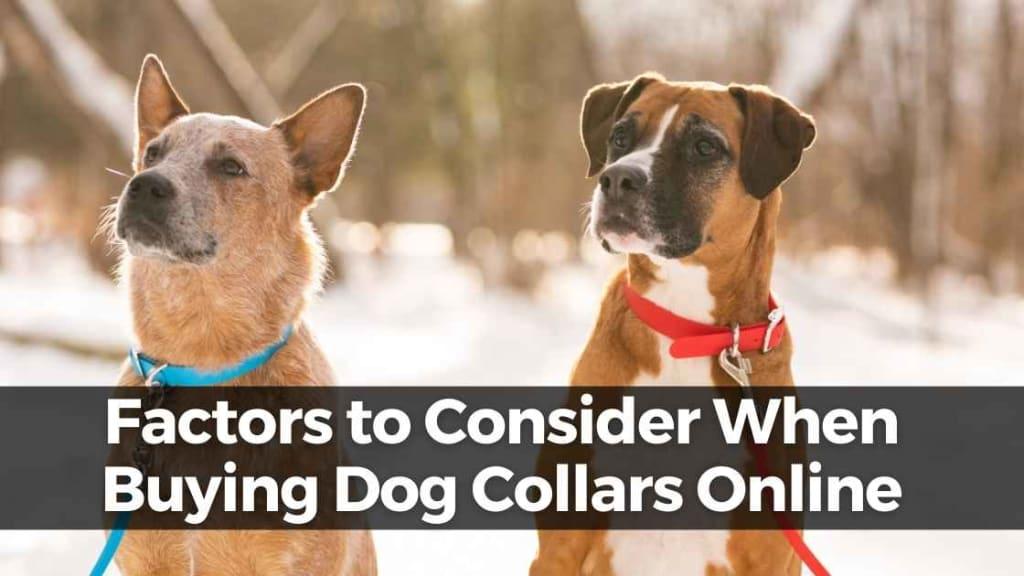 Buying Dog Collars Online