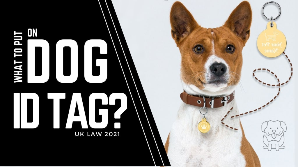 What to put on dog tag UK