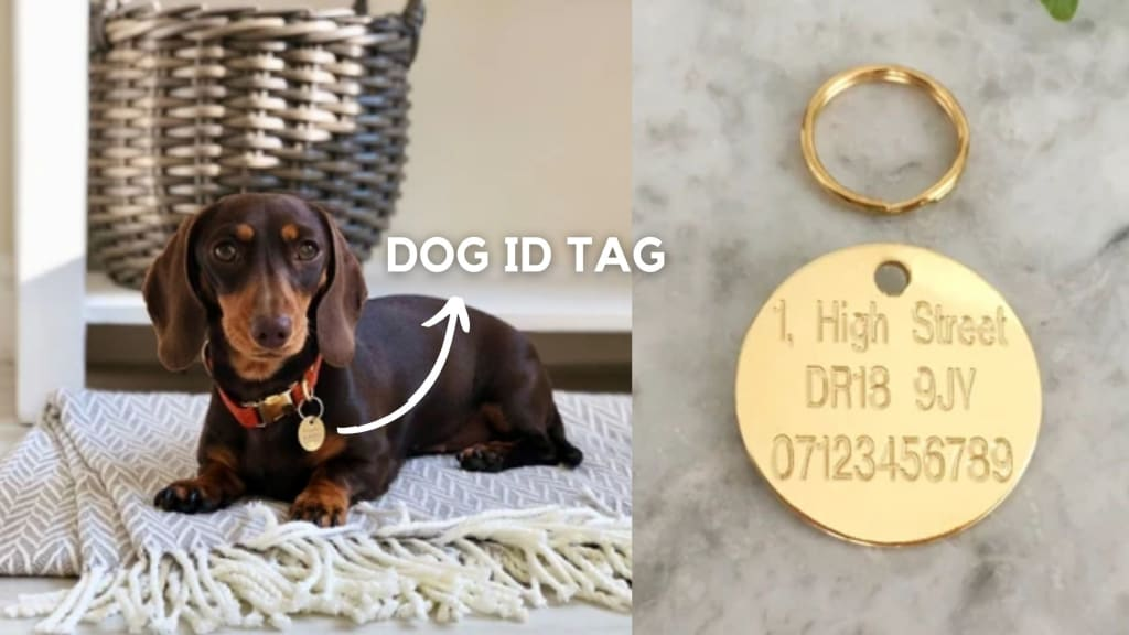 what to put on dog tag