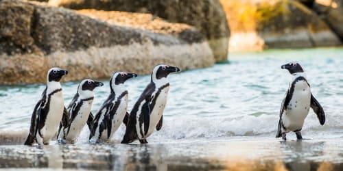 Resor till Kapstaden med Solresor