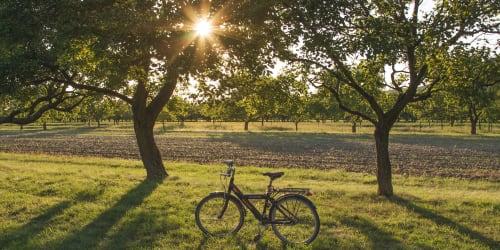 Cykel Bodensjön