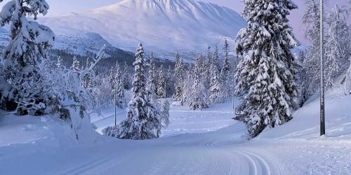 Skidor Telemark