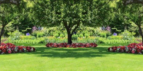 Vin och Trädgård