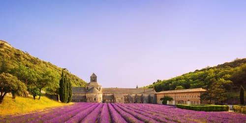 Lavendel i Provence