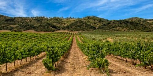 Vinvandring Rioja