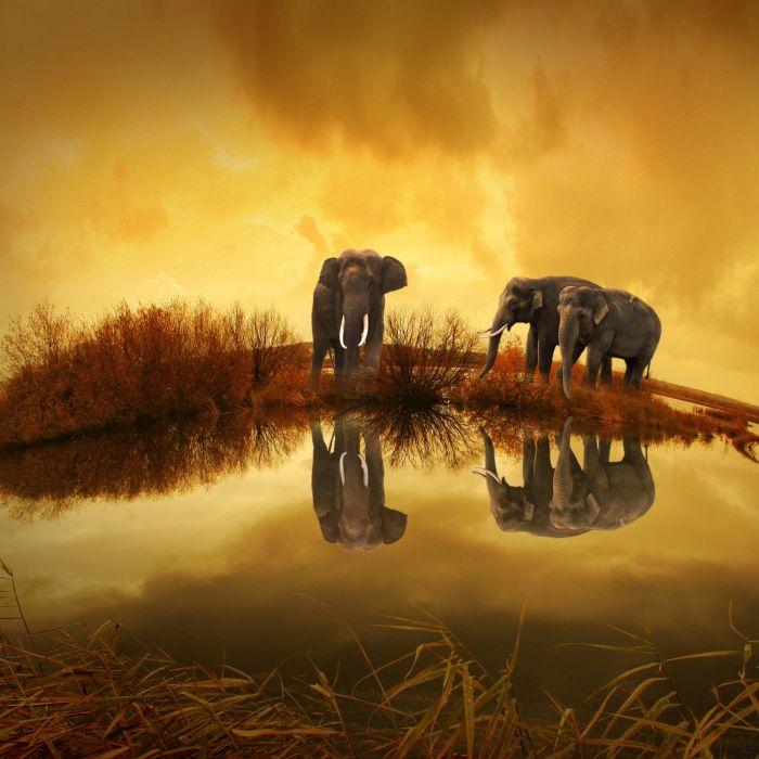 elephants • NOISE fm