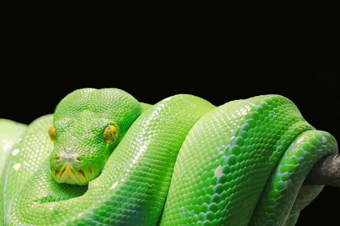 python-in-production