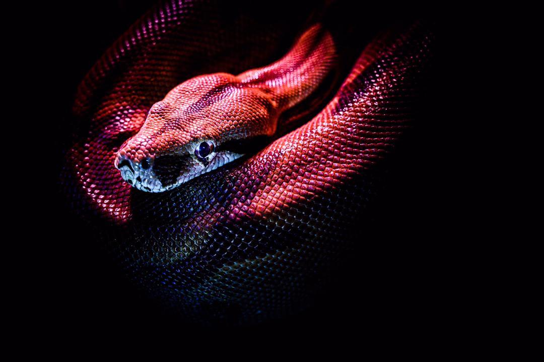 python-programming-limitation