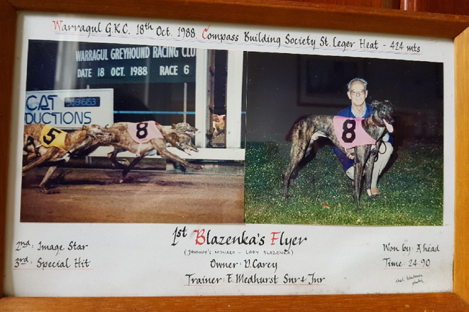 The great Blazenka's Flyer, Greyhound of the Year in 1989, with Ted's dad Ted