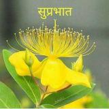 Photo of Anuja