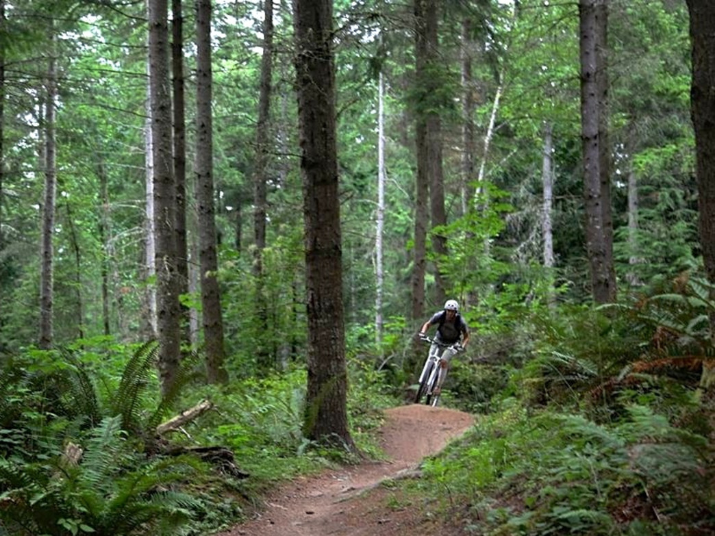 A rider ripping through the canopy on the north side of Galbraith Mountain.