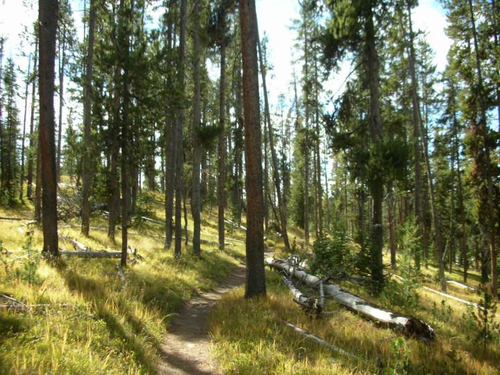 Bechler River Trail