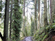Image for Forest Park Mountain Biking