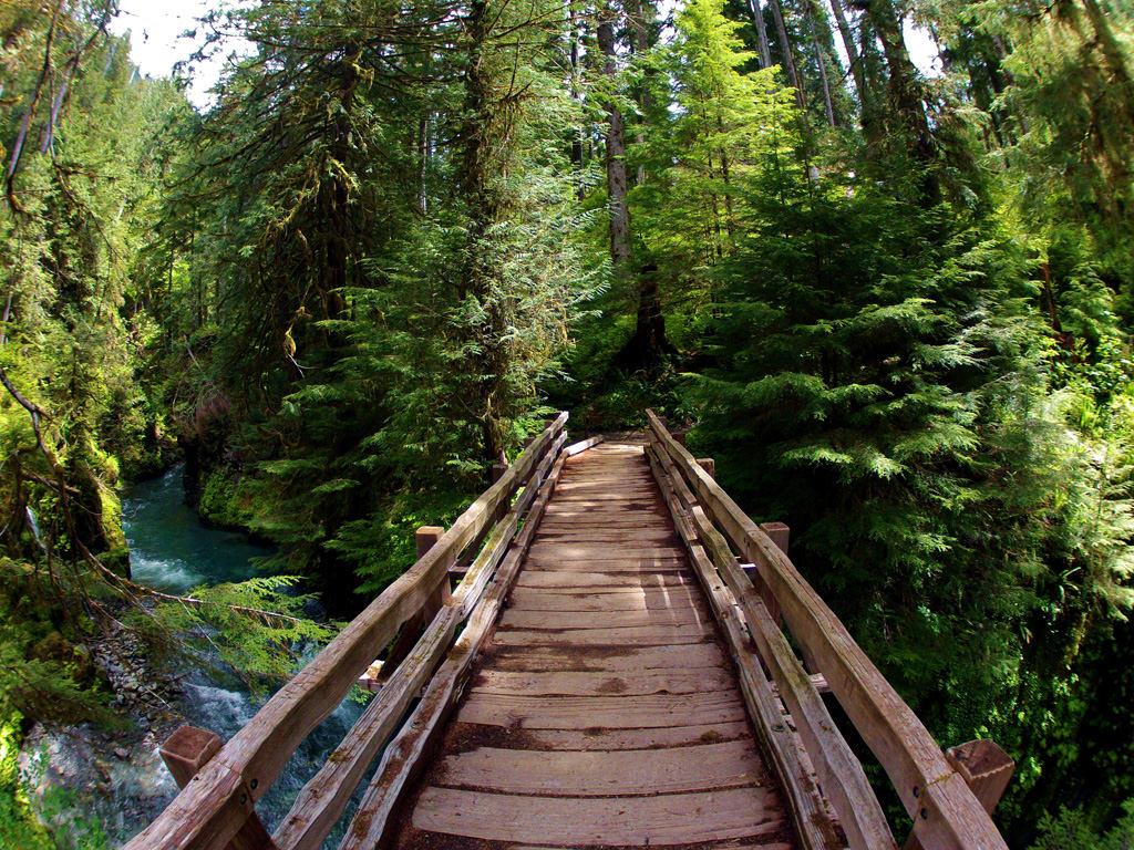 Pony Bridge in the Quinault Rainforest