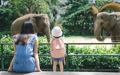 female sitting with young girl standing wearing hat and backpack with backs looking at an outdoor elephant habitat at a zoo